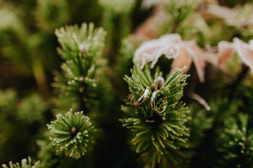 Detal ślubny w górach. Obrączki na kosodrzewinie w okolicach Morskiego Oka